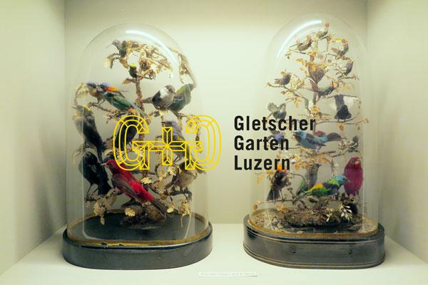 Gletschergarten Luzern Werbung Webseite UX